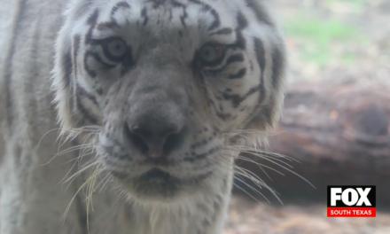 Gladys Porter Zoo Taking Extra Precautions