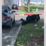 Police Department Responds To Arrest That Went Viral On Social Media